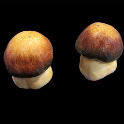 Pair of mushrooms