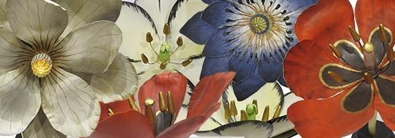 Collection Féerie botanique