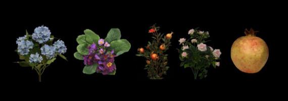 Fleurs et décoration végétale